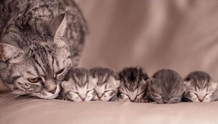 Con mèo số mấy? Mơ thấy mèo đánh đề con gì chuẩn?